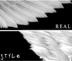 Real Wing PS brushes