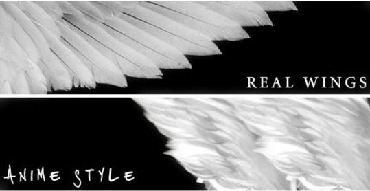Real Wing PS brushes - Photoshop Brushes free download: freedesignfile.com/248718-real-wing-ps-brushes