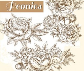 hand drawn peonies vintage vector