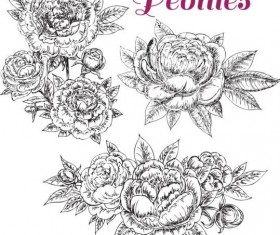 hand drawn set peonies vector