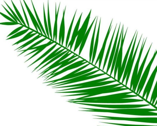Palm Leaves Photoshop Brushes Free Download