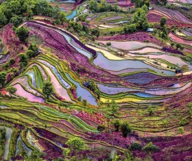 Aerial terraces covered with crops