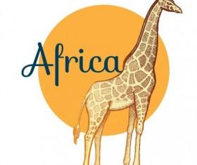 Africa giraffe vector