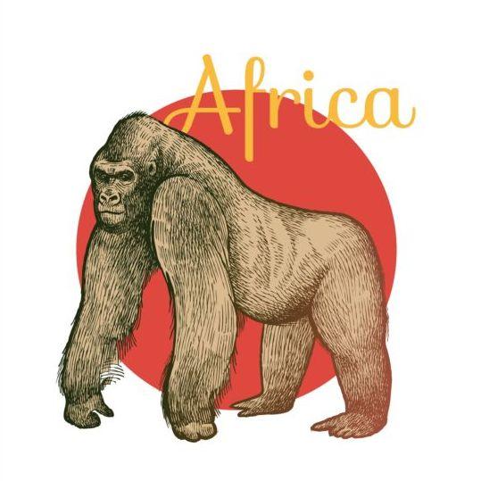 Africa orangutan vector