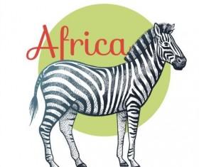 Africa zebra vector
