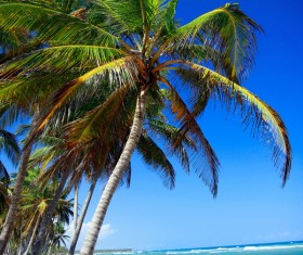 Beach Coconut trees with sea background