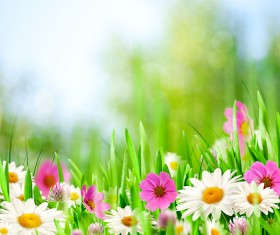 Blooming flowers with blurred background Stock Photo