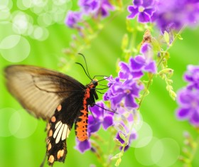 Butterfly with Beautiful Butterfly Orchid Stock Photo