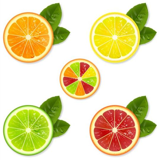 Citrus fruit illustration vector material