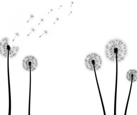 Dandelion black vector illustration 02