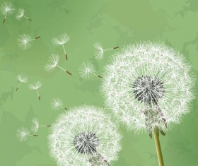 Dandelion with green grunge background vector 01