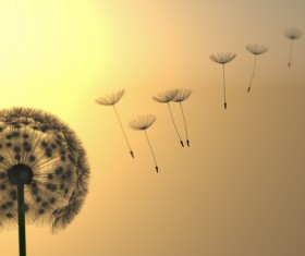 Dandelions and dancing seeds in the setting sun