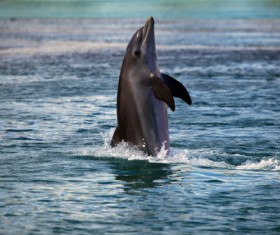 Dolphins standing in the water walking Stock Photo