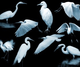 Egret PS Brushes