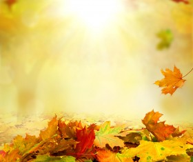Falling maple leaf with blurred sunlight background Stock Photo