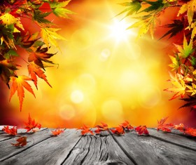 Falling maple leaf with sunny background Stock Photo