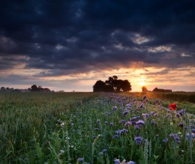 Farm and roadside blossoming flowers and sunset background