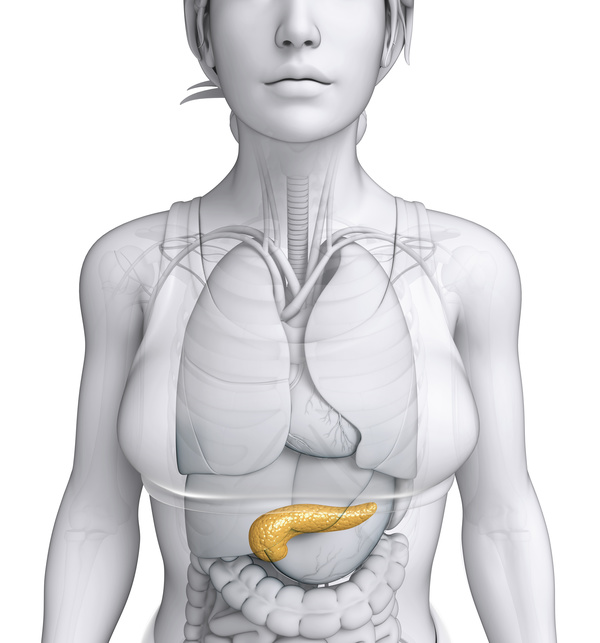 Female body parts of the pancreas - People stock photo free download