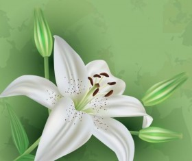 Flower lily with green grunge background vector 02