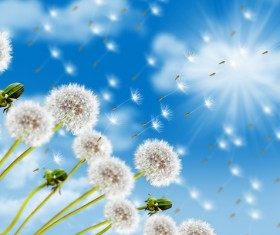 Flying into the distant dandelion seeds and blue sky background