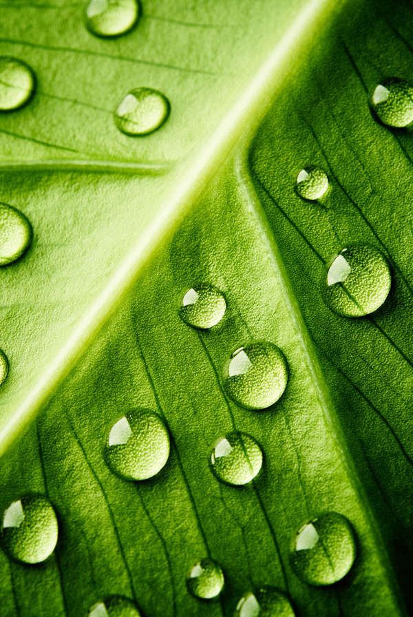 Fresh green leaves of dew Natural Background Photo 05