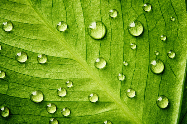 Fresh green leaves of dew Natural Background Photo 10