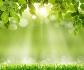 Green meadow with blurred sunny background HD picture