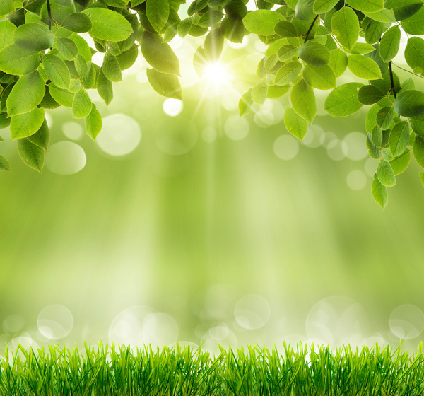 Green Meadow With Blurred Sunny Background Hd Picture Free Download