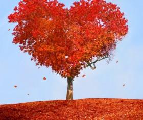Heart-shaped maple trees Stock Photo