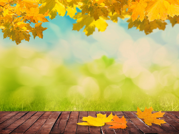 grass and sky backgrounds. Maple Leaf And Fuzzy Grass Blue Sky Background HD Picture Backgrounds R