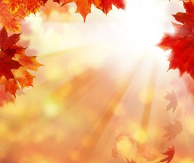 Maple leaf with blurred sunlight background Stock Photo 02