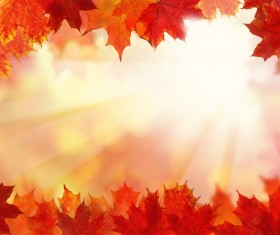 Maple leaf with blurred sunlight background Stock Photo 03