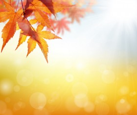 Maple leaf with blurred sunlight background Stock Photo 04