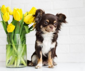 Puppy with yellow roses in vase Stock Photo