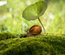 Snail and plant leaves forest background