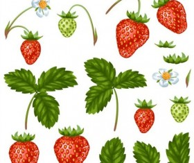 Strawberries with white flower and leaves vector