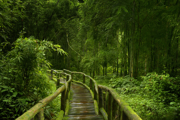 Trail With Bamboo Forest On Green Background Free Download