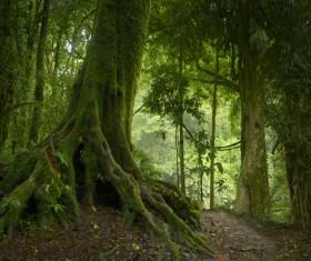 Trails through trees