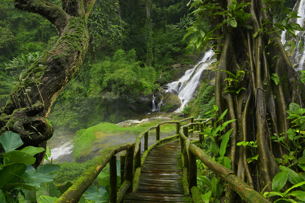 tree with wooden bridge with waterfall background free download