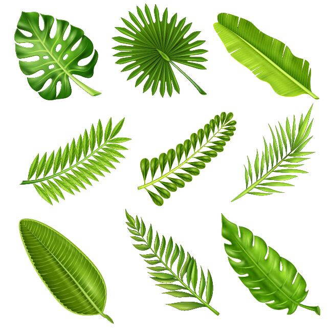 Tropical Plant Leaves Vector Set 01 Free Download Gograph allows you to download affordable illustrations and eps vector clip art. tropical plant leaves vector set 01