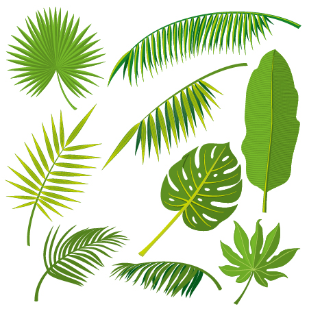tropical plant leaves vector set 02 free download