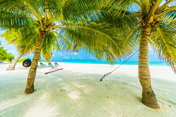 White Beach With Coconut Trees And Hammocks