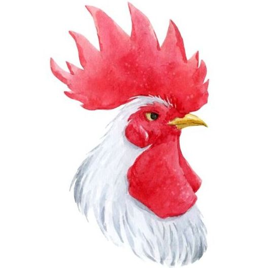 White rooster head vector