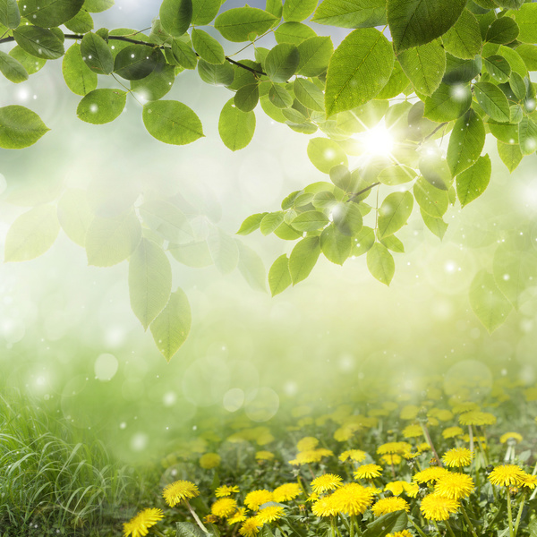 Yellow Flowers With Blurred Sunny Background HD Picture