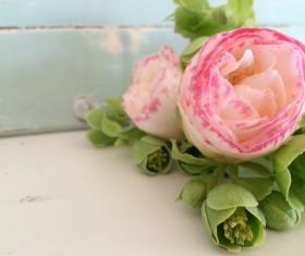 beautiful Camellia flowers Stock Photo