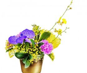 Beautiful Colorful flowers Stock Photo 01