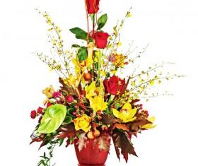 Beautiful Colorful flowers Stock Photo 03