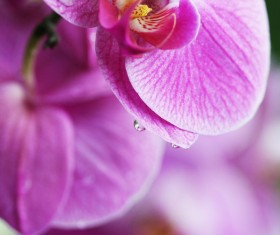 Beautiful butterfly orchid Stock Photo