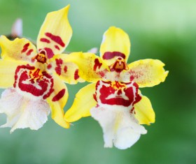 Beautiful face of orchid Stock Photo