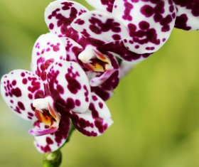 Beautiful white spotted purple orchid Stock Photo